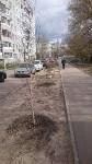 Высадка деревьев в Советском районе Тулы , Фото: 4