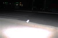 Мотоциклист сбил пешехода, Фото: 4
