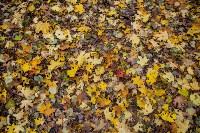 Золотая осень в Туле-2019, Фото: 33