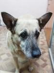 Собака Люся расплачивается за незаконно установленные батареи, Фото: 1