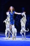 Цирковое шоу, Фото: 55