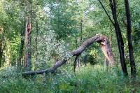 В Баташевском саду из-за непогоды упали вековые деревья, Фото: 5