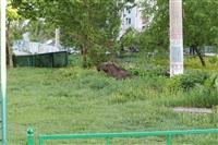 Лось во дворе дома №45 по ул. Плеханова, Фото: 4