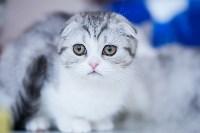 """Выставка """"Пряничные кошки"""". 15-16 августа 2015 года., Фото: 111"""