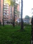 """У ресторана """"Пафос"""" срубили шесть здоровых берез, Фото: 7"""