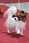 Выставка собак в Туле 26.01, Фото: 15