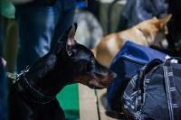 Выставка собак в Туле, Фото: 25