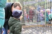 В Новомосковске открылся мини-зоопарк, Фото: 9