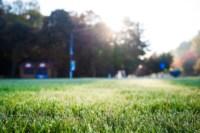 Центральный парк, утро, осень, Фото: 41