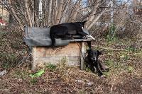 Дворняги, дворяне, двор-терьеры: 50 фото самых потрясающих уличных собак, Фото: 8