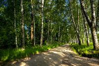 Летний день в Ясной Поляне, Фото: 36