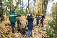 В Центральном парке Тулы появился сосновый бор «Слободы», Фото: 40