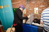 Выставка кошек в Искре, Фото: 36