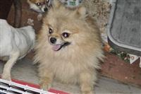 Похищенные собаки, Фото: 4
