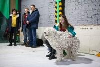 Выставка собак в Туле, Фото: 64