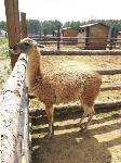 Куда свозить детей посмотреть на животных в 100 км от Тулы: обзор, Фото: 6