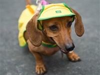 Собачий карнавал, Фото: 2