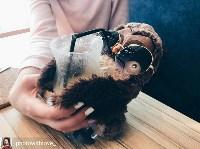 Сова, кофейня, Фото: 19