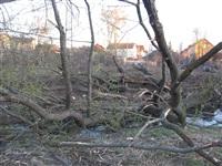 Спиленные деревья в ручье березовой рощи, Фото: 6