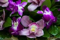 Ассортимент тульских цветочных магазинов. 28.02.2015, Фото: 18