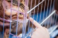 Выставка кошек в МАКСИ, Фото: 49