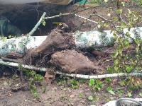 В Тульской области в лесу поисковики нашли захоронение артиллеристов и лошадей, Фото: 1