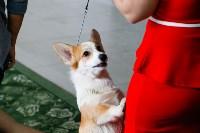Выставка собак в Туле, Фото: 72
