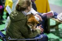 Выставка собак в Туле 14.04.19, Фото: 45