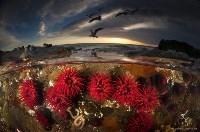 Высокую оценку жюри поличила фотография «Анемоны на рассвете»., Фото: 11