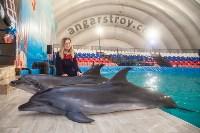 Дельфины, Фото: 14