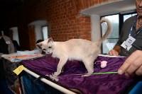 Выставка кошек в Искре, Фото: 13