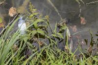 Туляки сообщают о массовой гибели уток в Платоновском парке, Фото: 13