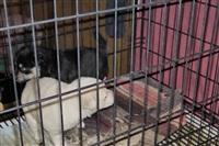 Похищенные собаки, Фото: 6