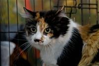 В Туле прошла международная выставка кошек «Зимнее конфетти», Фото: 5
