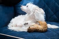 Экзотические животные в квартире, Фото: 80