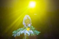"""""""Тайна пирата"""" в Тульском цирке, Фото: 112"""