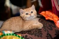 Выставка кошек в Искре, Фото: 85