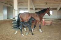 «Куликово поле» объявляет конкурс на лучшее имя для маленькой лошадки, Фото: 1