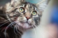 Выставка кошек в МАКСИ, Фото: 47