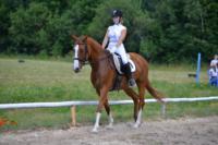 В Ясной поляне стартовал турнир по конному спорту, Фото: 131