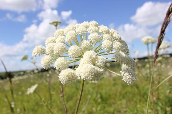 Чудо цветок