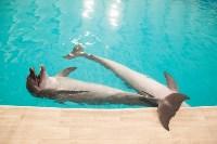 Дельфины, Фото: 12