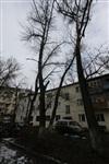 Аварийные деревья в тульских дворах, Фото: 1