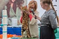 Выставка кошек в Туле, Фото: 28