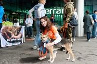 Благотворительный фестиваль помощи животным, Фото: 6