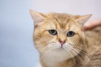 Выставка кошек в МАКСИ, Фото: 88