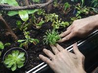Укротитель хищных растений Сергей Куницын, Фото: 6