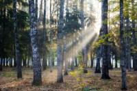 Центральный парк, утро, осень, Фото: 43
