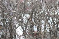 Снегопад в Туле, 28 ноября, Фото: 27