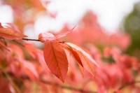 Золотая осень в Туле-2019, Фото: 19